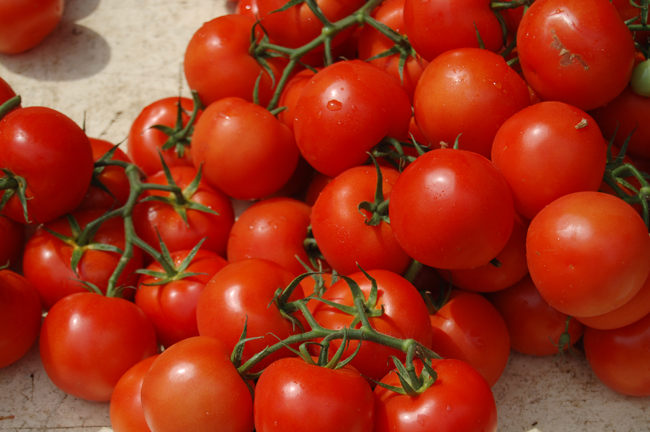 vine_tomatoes