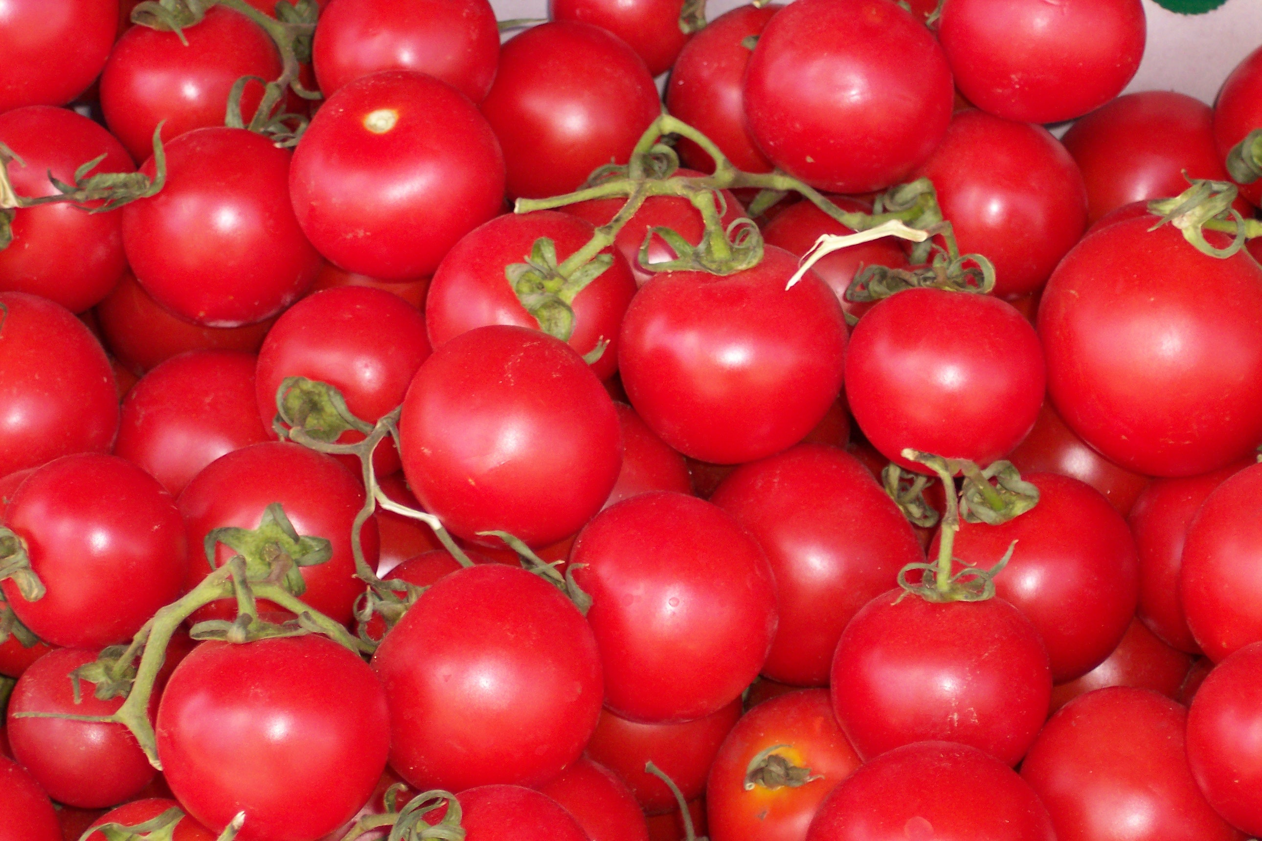 What Tomatoes Need To Grow Well
