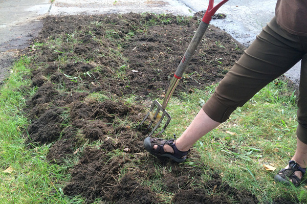 Preparing the Soil For the Best Tomatoes