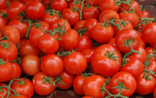 Homegrown Tomatoes Heirloom or Hybrid What's the Difference?