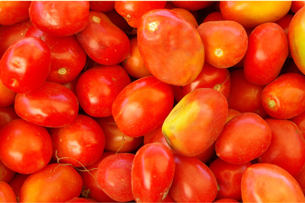 Tomato varieties – which are the best tomato plants