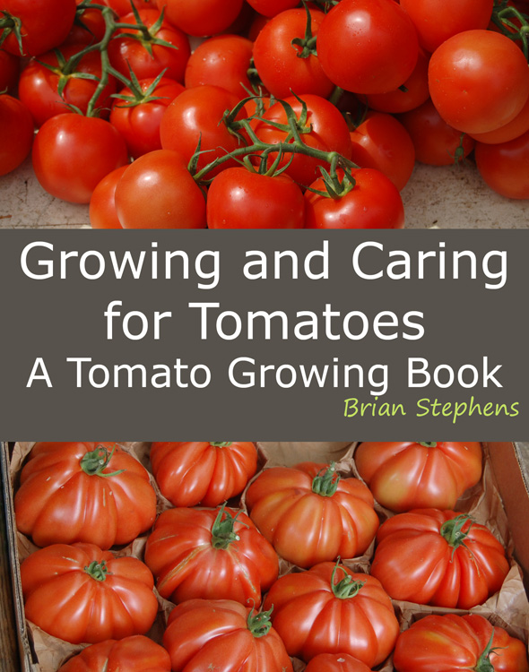 Growing tomatoes in the USA